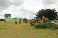 Câmara vai plantar 80 árvores durante reforma de suas instalações; Ficus atuais estão sendo retiradas